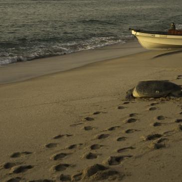 Meeresleuchten und Schildkröten im Sonnenaufgang