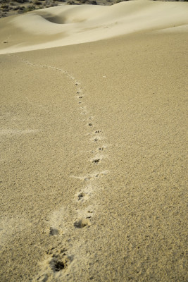 leave only footsteps