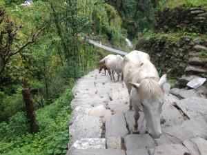 Poon Hill Trekk