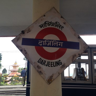 Back to India – Tee trinken in Darjeeling