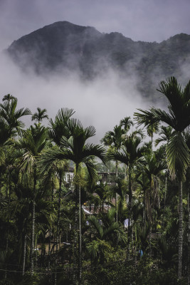 Nebel im Paradies